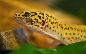 gecko-517670_960_720
